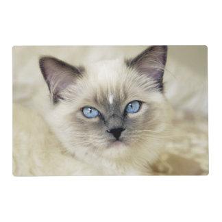 Ragdoll kitten placemat