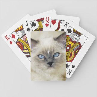 Ragdoll kitten playing cards