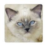 Ragdoll kitten puzzle coaster