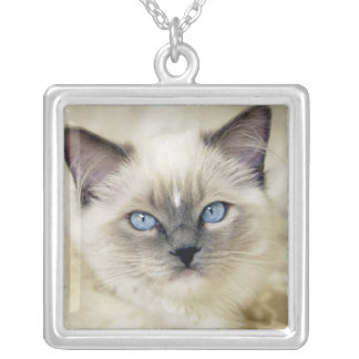 Ragdoll kitten silver plated necklace