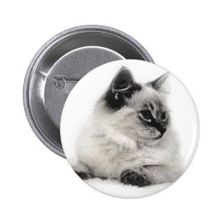 ragdoll kitten sketch button