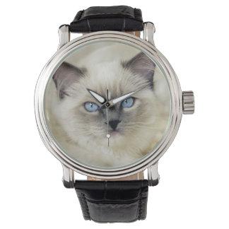 Ragdoll kitten watch