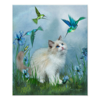 Ragdoll Kitty And Hummingbirds Art Poster/Print Poster