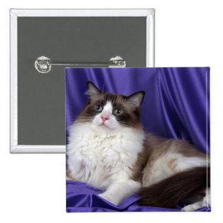 Ragdoll, seal bi-color 2 inch square button