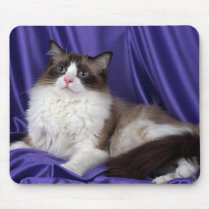 Ragdoll, seal bi-color mouse pad