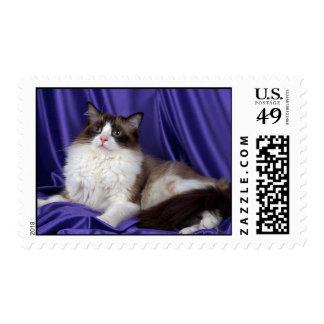 Ragdoll, seal bi-color postage