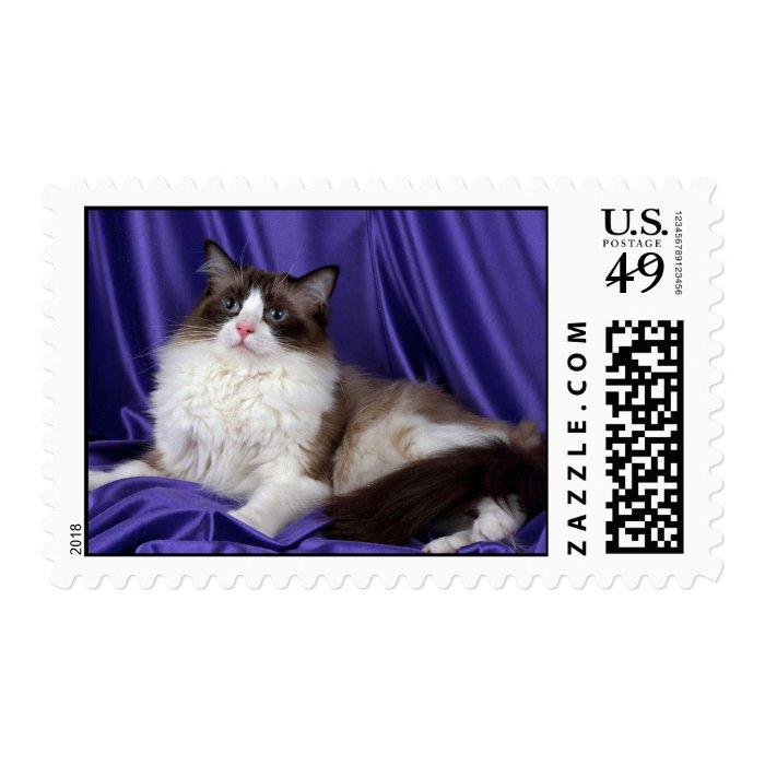 Ragdoll, seal bi-color stamp