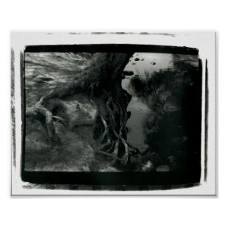 Ragged Tree Poster