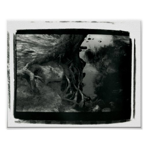 Ragged Tree Poster