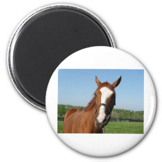 Rags to Riches headshot 2 Inch Round Magnet
