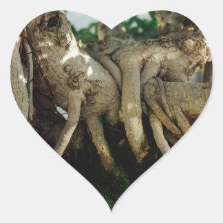 Raíces de los bonsais del Ficus del Banyan de Pegatina En Forma De Corazón