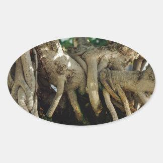 Raíces de los bonsais del Ficus del Banyan de Pegatina Ovalada