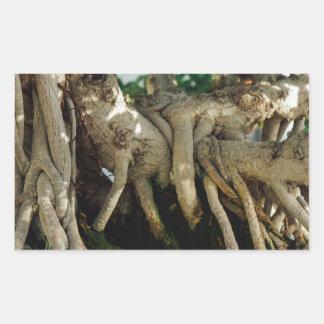 Raíces de los bonsais del Ficus del Banyan de Pegatina Rectangular