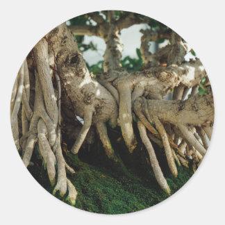 Raíces de los bonsais del Ficus del Banyan de Pegatina Redonda