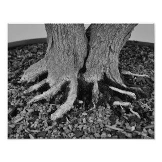 Raíces de los bonsais - impresión fotos