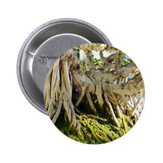 Raíces del árbol de los bonsais del Banyan del Fic Pins