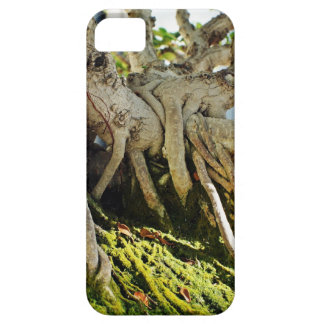 Raíces del árbol de los bonsais del Banyan del Funda Para iPhone SE/5/5s