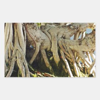 Raíces del árbol de los bonsais del Banyan del Pegatina Rectangular