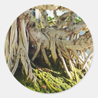 Raíces del árbol de los bonsais del Banyan del Pegatina Redonda