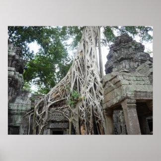 raíces del árbol del prohm de TA Posters