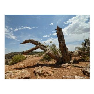 Raíces del árbol en el Gran Cañón Tarjeta Postal