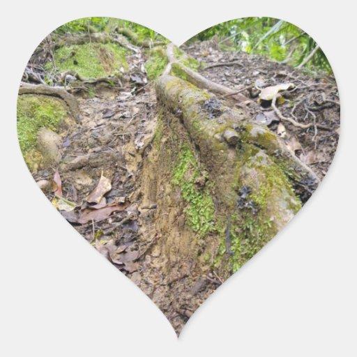 Raíces del bosque pegatina en forma de corazón