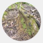 Raíces del bosque pegatina redonda