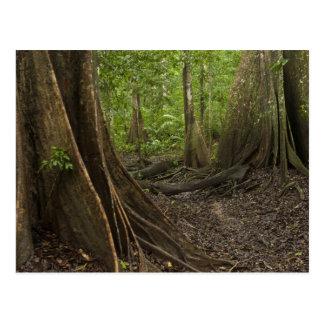 Raíces del contrafuerte. Selva tropical, Mapari Postal