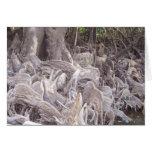 Raíces del mangle tarjeton