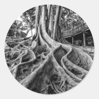 Raíces masivas del árbol de goma pegatinas redondas