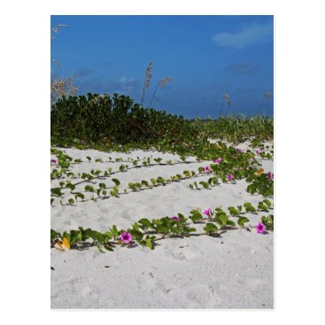 Beach Themed Railroad Vines on Boca I Postcard