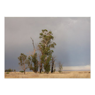 Rain approaching thirsty trees and field. poster