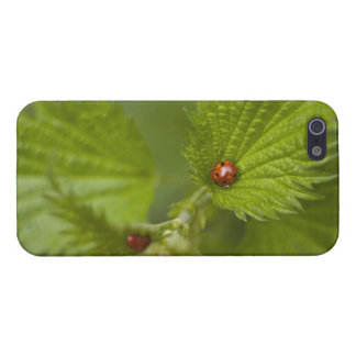 Rain Covered Ladybugs Cover For iPhone SE/5/5s