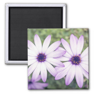 Rain Daisy Double Refrigerator Magnets