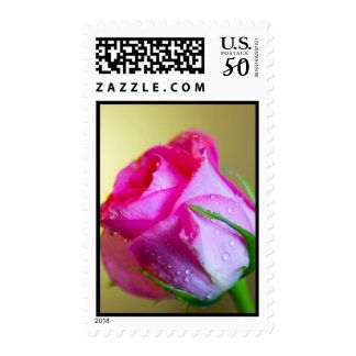 Rain Drop Kisses of Nature on Pink Rose Postage