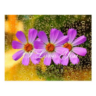Rain drop with cosmos flower postcard