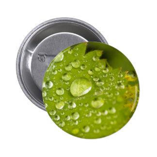 Rain droplets on a green leaf pinback button