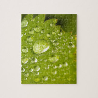 Rain droplets on a green leaf puzzles