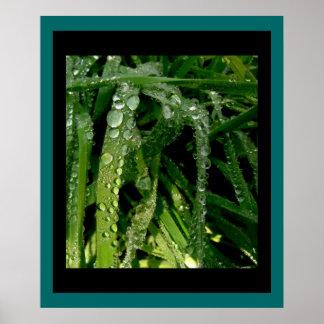 Rain Drops on Grass Print