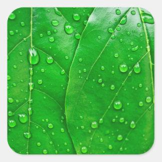 Rain drops on green leaves square sticker