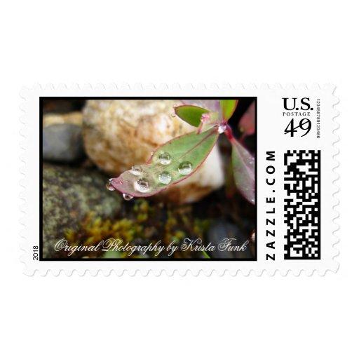 Rain Drops on Leaf Stamp