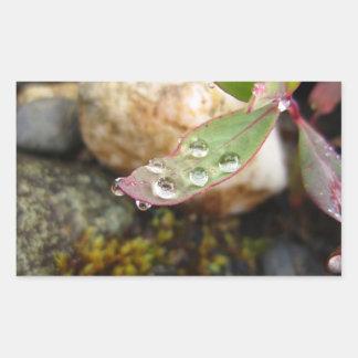 Rain Drops on Leaf Rectangular Sticker