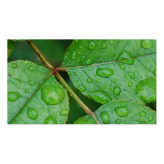 Rain Drops on Leaves mf Double-Sided Standard Business Cards (Pack Of 100)