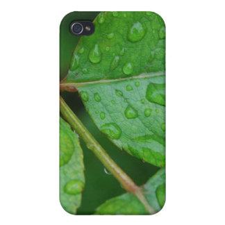 Rain Drops on Leaves mf iPhone 4/4S Case