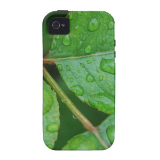 Rain Drops on Leaves mf iPhone 4 Cases