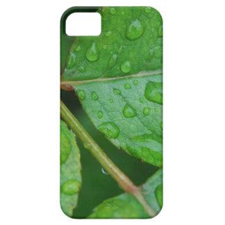 Rain Drops on Leaves mf iPhone 5 Covers