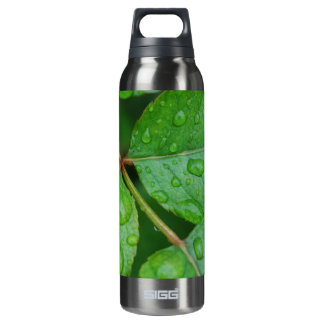 Rain Drops on Leaves mf 16 Oz Insulated SIGG Thermos Water Bottle