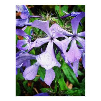 Rain Drops on Wildflowers#wildflower Postcard