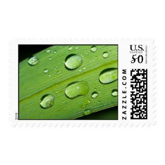 Rain Drops Stamps