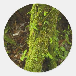 Rain Forest 3 Round Stickers